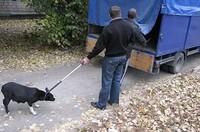 Кто имеет право отлавливать бездомных животных